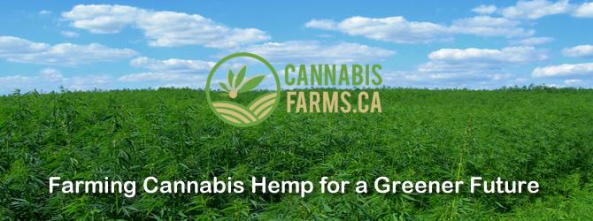 Cannabis_Farms